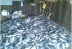 Aquicultura e Pesca
